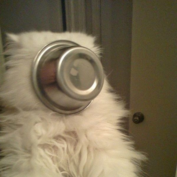 Funny cats - part 102 (40 gifs + 10 gifs), funny cat pictures, cat photos, cute cats