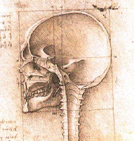 Cráneo, crin, córnea