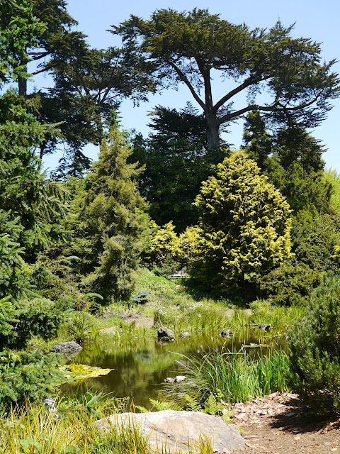 Little Hiccups San Francisco Botanical Gardens