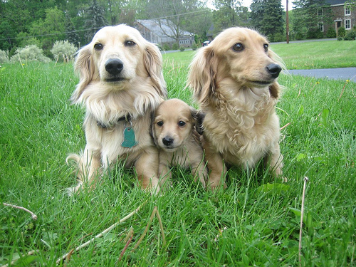 Dog Breed Pictures Small Large