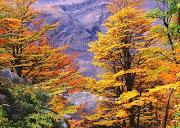 Y el Otoño llegó paisaje de otono