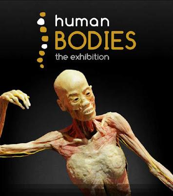 Human Bodies 1