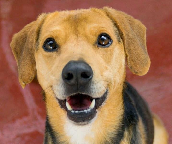 Foto razze di cani taglia media for Nomi per cani taglia piccola