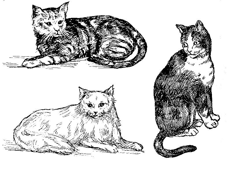 gatos para imprimir