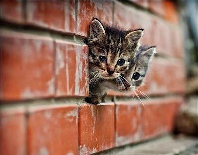 Imágenes de Gatos, cute cats