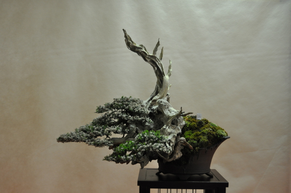 Big little trees more great bonsai trees for Bonsai italia