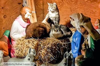 foto kucing di rumah natal 03