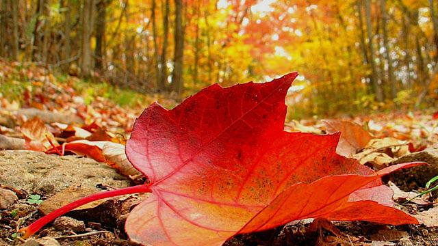 Dazzling Leaf Images