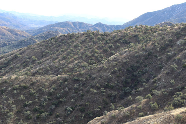 Coues%2BDeer%2BCountry%2Bwhile%2Bglassing%2Bin%2Bsonora%2Bmexico%2Bwith%2Bcolburn%2Band%2Bscott%2Boutfitters%2B3.JPG