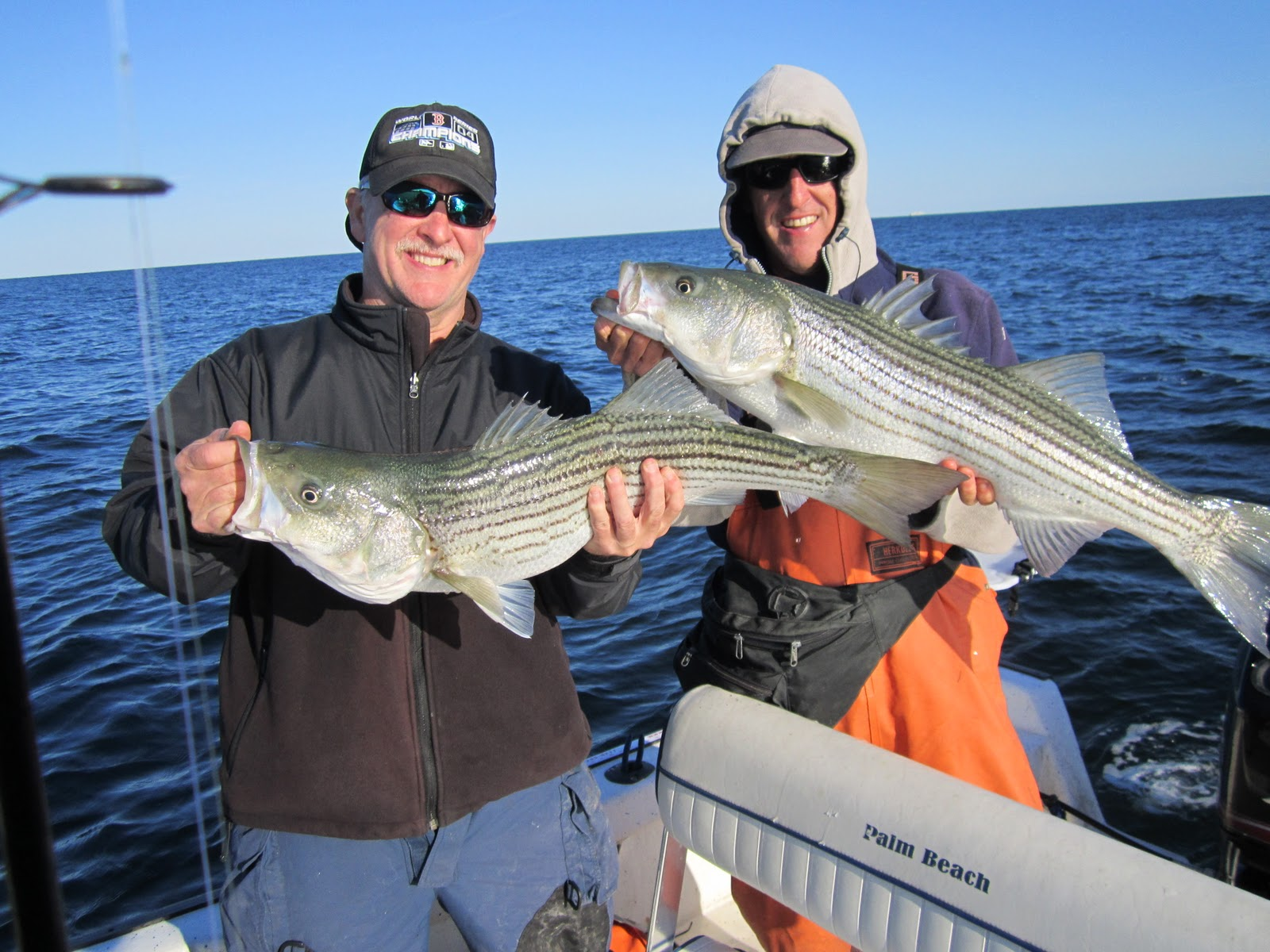 Rhode island striped bass fish everywhere for Fishing for striped bass