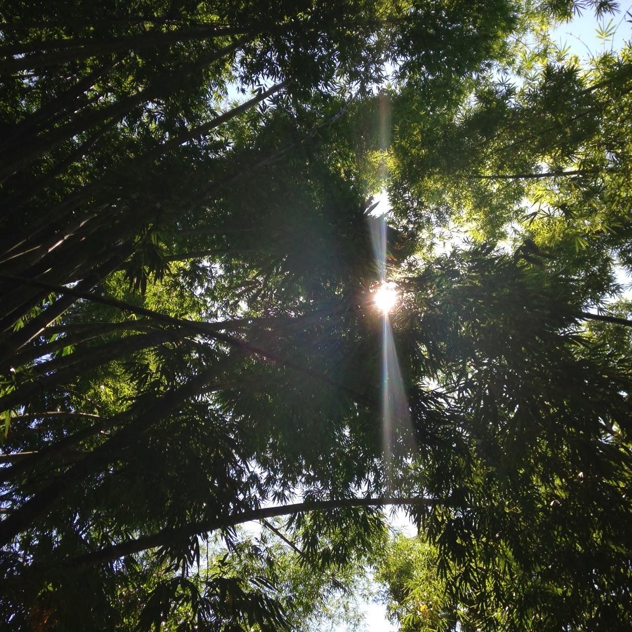 ipe de jardim botânico:lugar aqui na Cidade Maravilhosa que eu amo e por isso aproveitei para