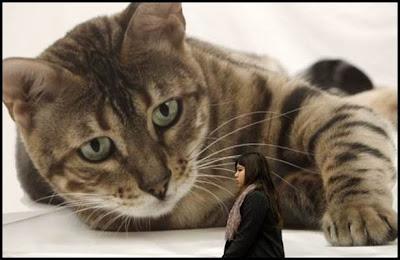 pertunjukan kucing antrabangsa athens