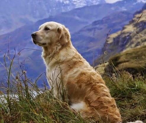 Hiking or Camping with your Dog