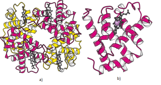 protein structure and function research papers We will make a long-term commitment to detailed structure/function studies of this important protein we hope that this research will advance  view research papers.