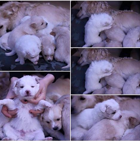 cuccioli cane sos cane aiuto emergenza Bari