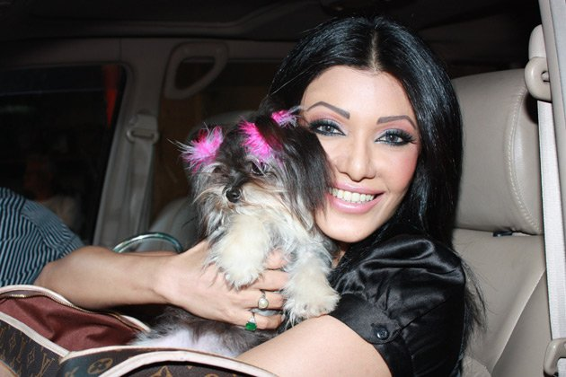 Koena Mitra too has got seven puppies at her home. They all belong to ...