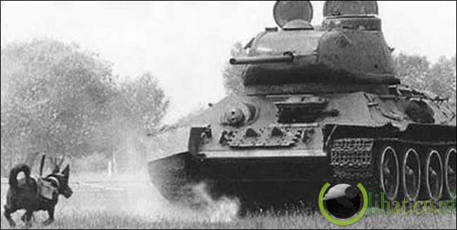 Anti-tank Dog