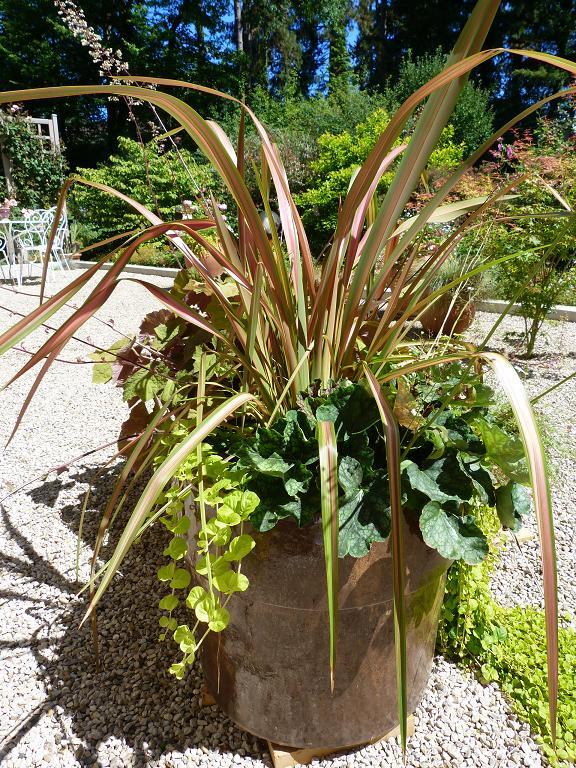 Les pins noirs vivaces ou succulentes en pots ou comment jardiner facile - Graminees en pot ...