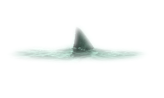 shark fin white background - photo #14