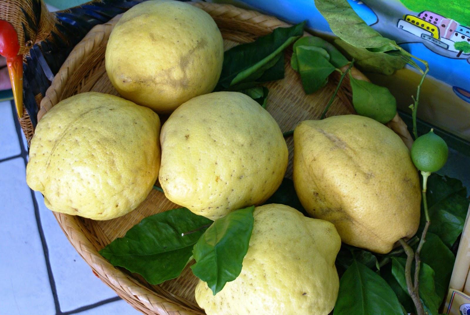 Lemons in Ischia, Italy