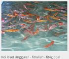 Riset Ikan Koi