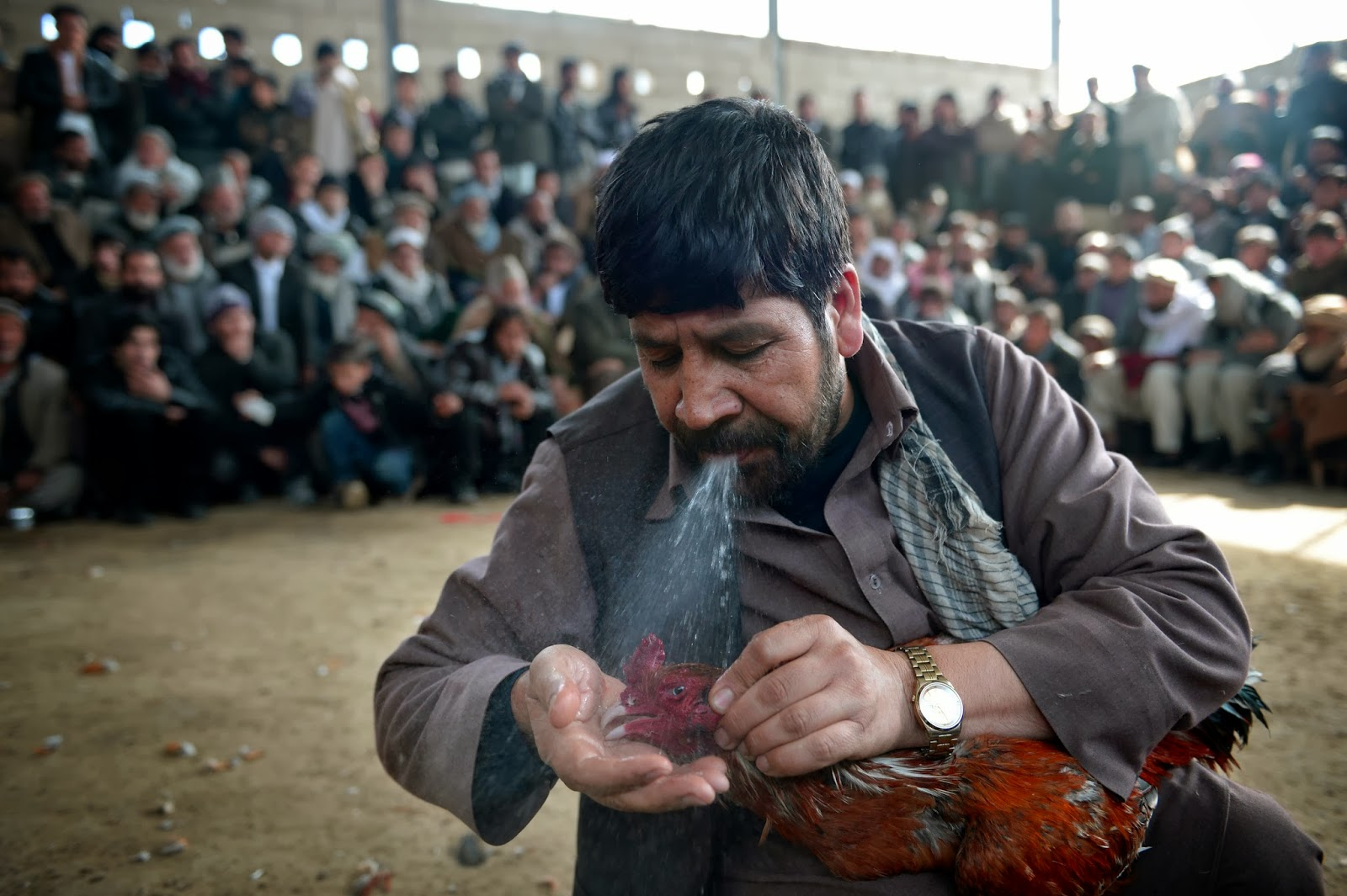 Cockfighting (Murgh Janghi) Tournament in Kabul Photos