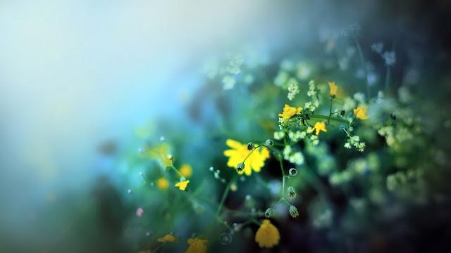 Hình nền khu vườn mùa xuân - ảnh 1