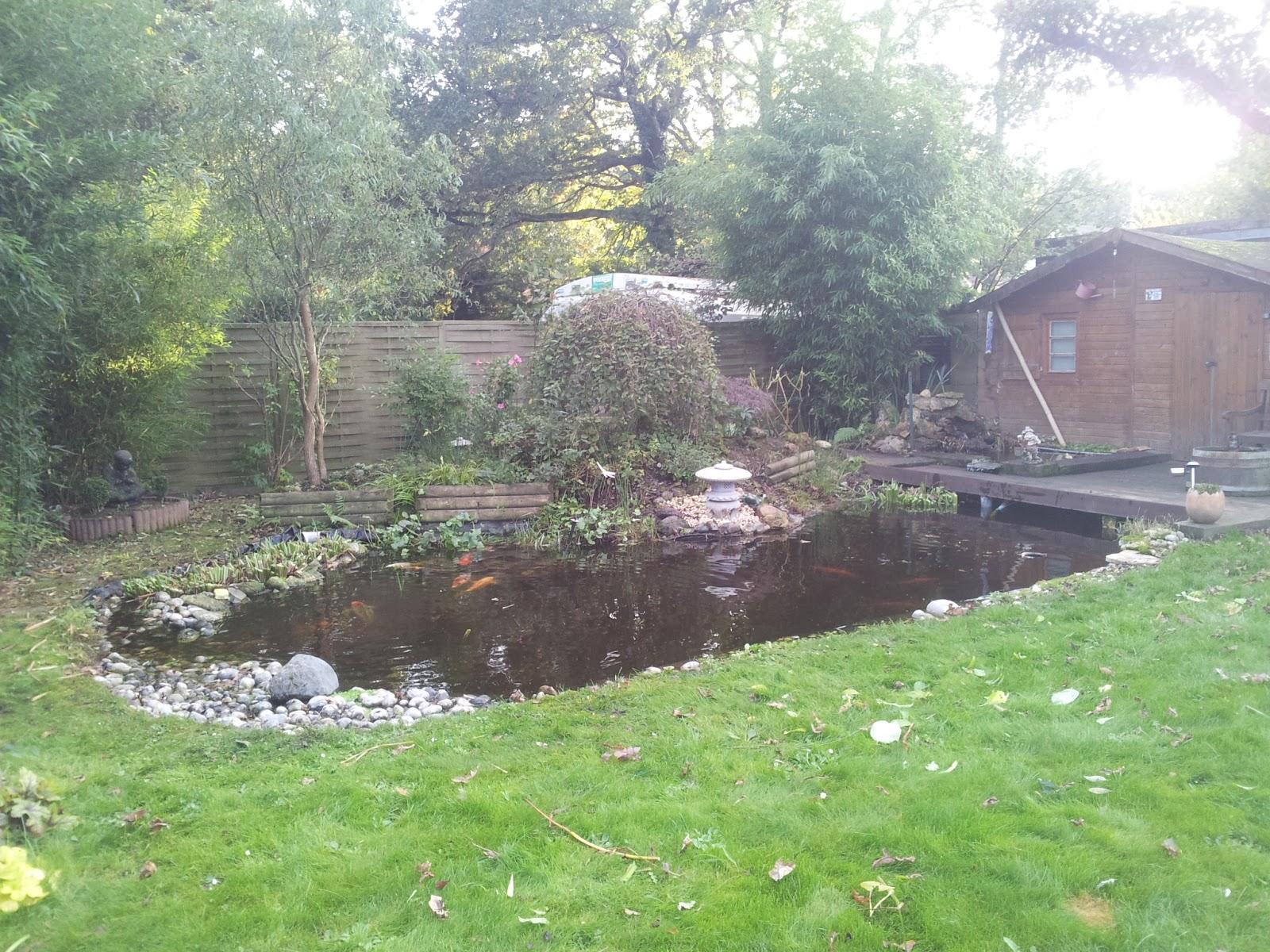 mon petit bassin de jardin taille d 39 automne. Black Bedroom Furniture Sets. Home Design Ideas