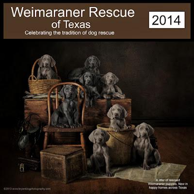 Weimaraner Rescue of Texas - 2014 calendar