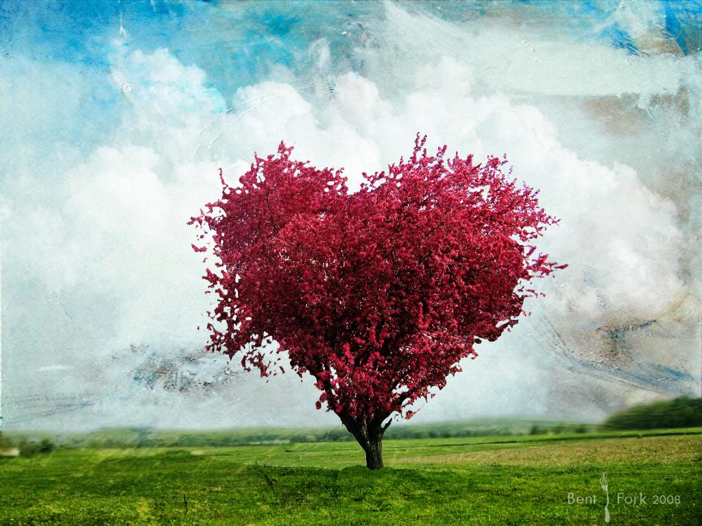 http://2.bp.blogspot.com/-0gRlVMU4MyE/Tooiaa3e39I/AAAAAAAACAQ/COvitBZ39ao/s1600/Love_tree_Wallpaper_ofdgi.jpg