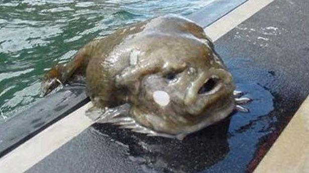 El Baño Mas Feo Del Mundo:El Animal Mas Feo Del Mundo