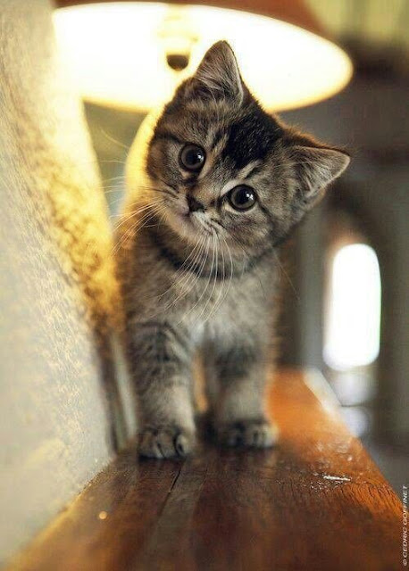 Photo chaton adorable