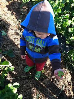 farm, strawberries, fresh picked