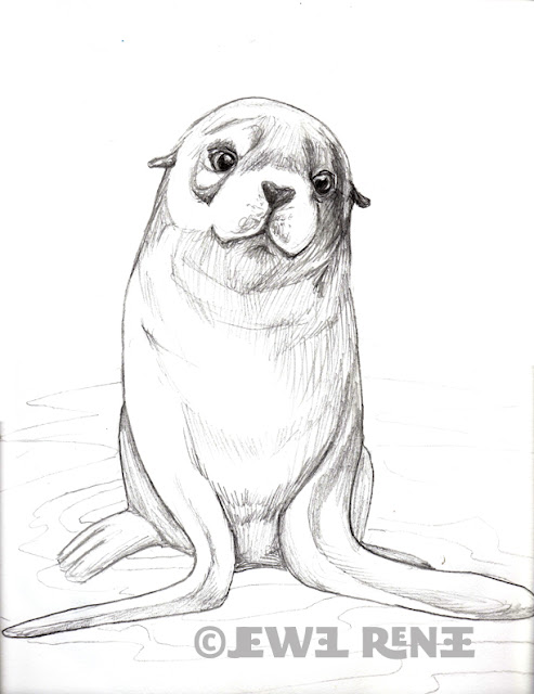 Jewel Renee Illustration: Fur Seal Pup Pencil Drawing Baby Arctic Seal Drawing