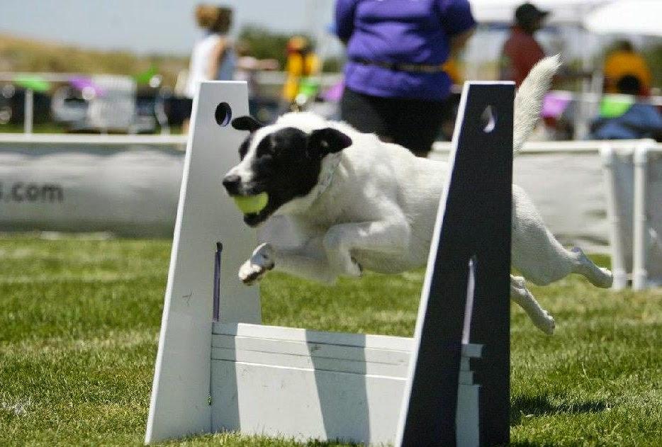 perro haciendo ejercicio