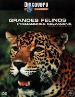 Grandes Felinos: Predadores Selvagens