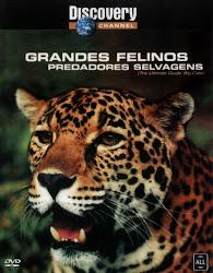 Baixar Filme Grandes Felinos: Predadores Selvagens (Dublado) Gratis