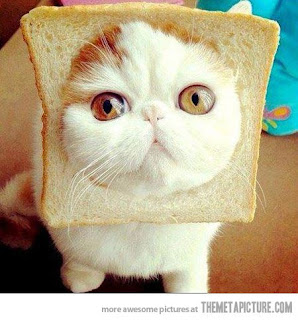 funny cat bread face cute