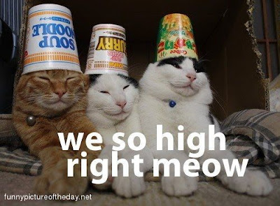 We So High Right Meow Funny Silly Cats