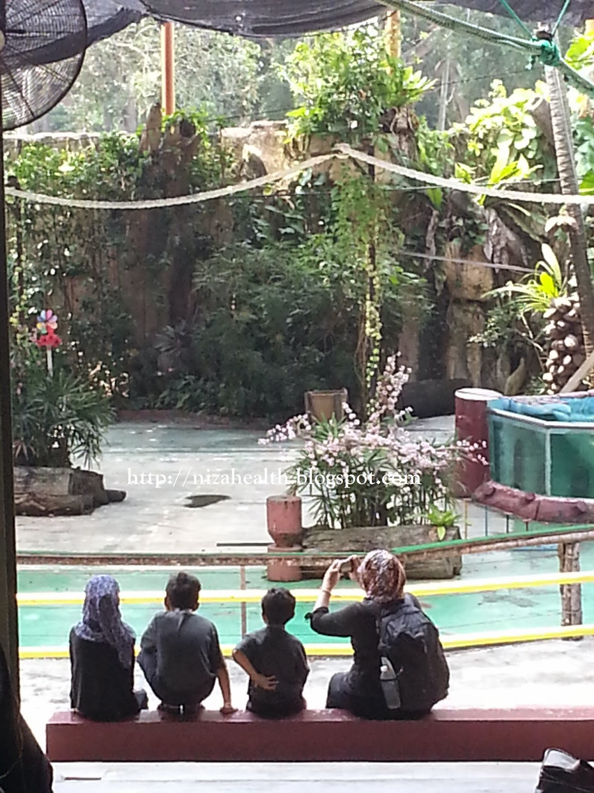 Pertunjukan Haiwan Yang Meniti dari atas tali