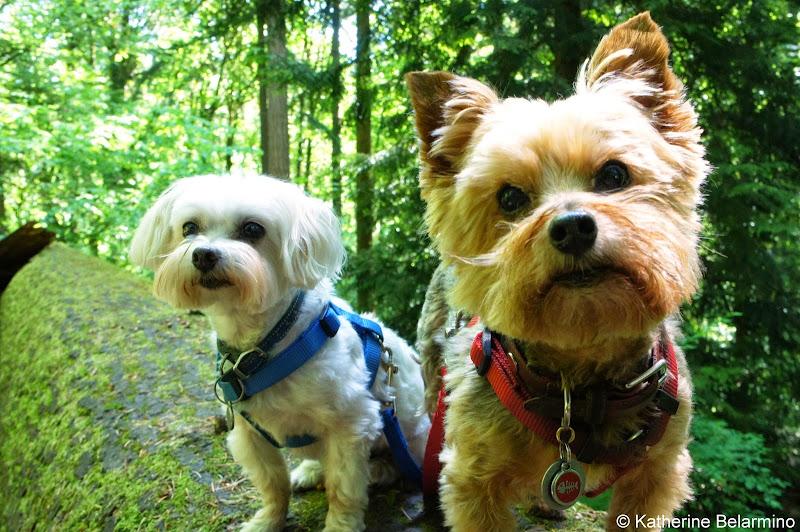 Henry and Charlie at Hoyt Arboretum Portland Oregon