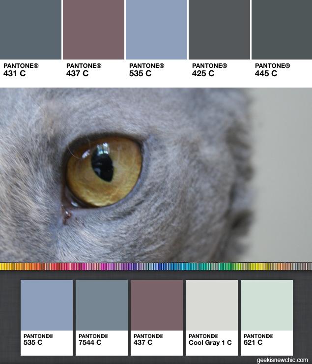 Pantone your cat