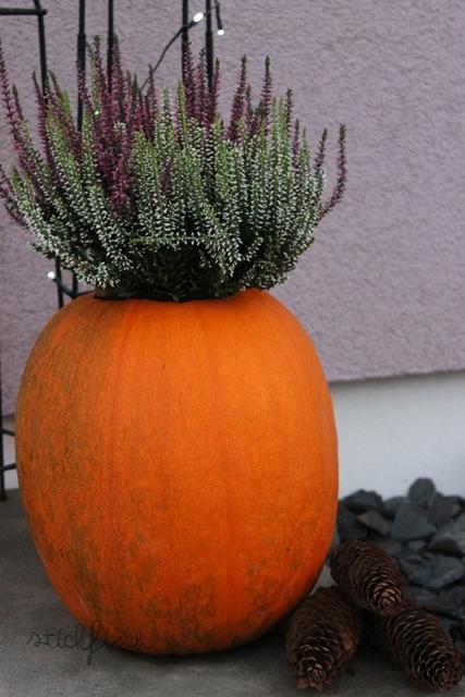 Herbst deko k rbis als blumentopf mit heide kata - Herbstdeko kurbis ...