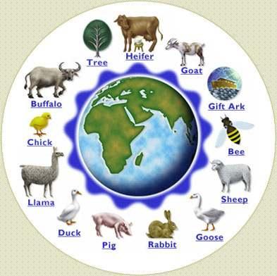 Heifer International Animals