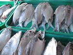 Ikan Terubuk Masin