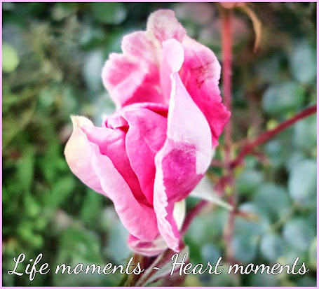 """LIFE MOMENTS - HEART MOMENTS"""