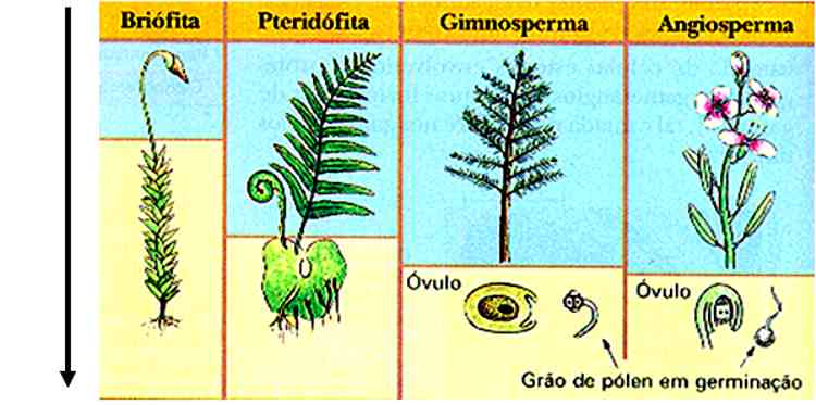 Pedagogía Los reinos de la biología