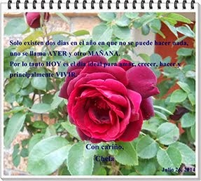 Preciosa rosa regalo de Chela con un hermosa frase