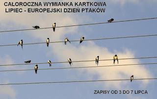 europejski dzień ptaków