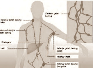Titik-titik lokasi kelenjar getah bening pada tubuh